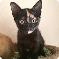 Adopt A Pet :: Poppy - Gainesville, FL