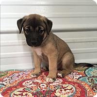Adopt A Pet :: Merritt - Russellville, KY