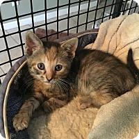 Adopt A Pet :: Tiffany - East Brunswick, NJ