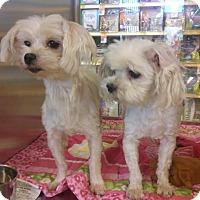 Adopt A Pet :: Jackie - San Fernando Valley, CA