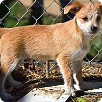 Adopt A Pet :: Dusty - Simi Valley, CA
