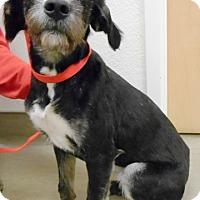 Adopt A Pet :: Elphaba - Redding, CA
