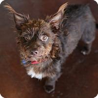 Adopt A Pet :: Barney - San Antonio, TX