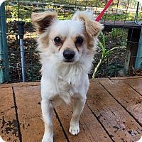 Adopt A Pet :: Levi - Santa Ana, CA