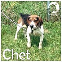 Adopt A Pet :: Chet - Novi, MI