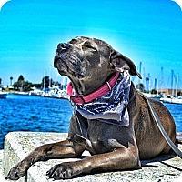 Adopt A Pet :: Dina - San Diego, CA