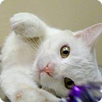 Adopt A Pet :: Emmitt - Chicago, IL