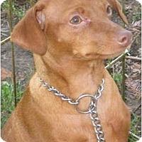 Adopt A Pet :: puppy male - Sun Valley, CA