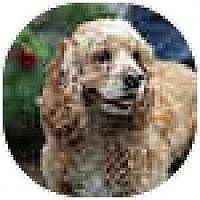 Adopt A Pet :: Sonny Delight - Tacoma, WA