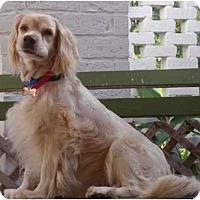 Adopt A Pet :: Grissom - Sugarland, TX