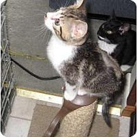 Adopt A Pet :: Beau - Kirkwood, DE