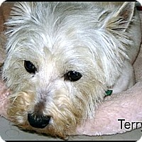 Adopt A Pet :: Terry - Franklinton, NC