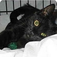 Adopt A Pet :: Snider, Snickers - Cincinnati, OH