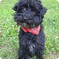 Adopt A Pet :: Luigi - Mocksville, NC