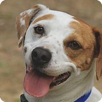 Adopt A Pet :: Ellie Mae - San Francisco, CA