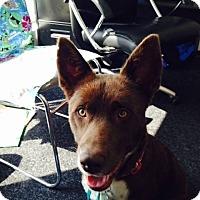Adopt A Pet :: Brady - Alpharetta, GA