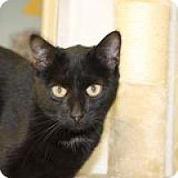 Adopt A Pet :: Magnolia - El Cajon, CA