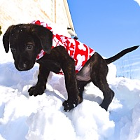 Adopt A Pet :: Kahlua - Ijamsville, MD