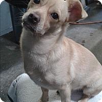 Adopt A Pet :: Freddy - San Francisco, CA
