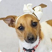 Adopt A Pet :: Dolce - Fort Lauderdale, FL