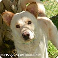 Adopt A Pet :: Bacon - Miami, FL