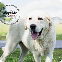 Adopt A Pet :: Sunny - Broken Arrow, OK