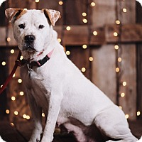 Adopt A Pet :: Joanie - Portland, OR