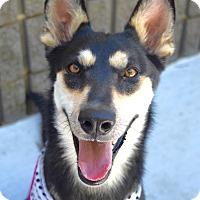 Adopt A Pet :: Raven - Dublin, CA