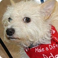 Adopt A Pet :: Dory - Palm Springs, CA