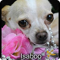 Adopt A Pet :: Isaboo - Simi Valley, CA