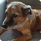Adopt A Pet :: Jake (COURTESY POST)
