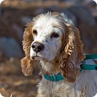 Adopt A Pet :: Mugsy - Phoenix, AZ
