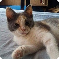 Adopt A Pet :: Cassidy Monroe - fort wayne, IN
