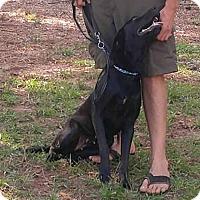 Adopt A Pet :: AA Skye - McCormick, SC