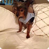 Adopt A Pet :: Timmy - Bucks County, PA