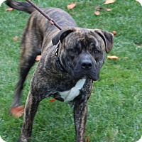 Adopt A Pet :: Gunther - Harrisonburg, VA
