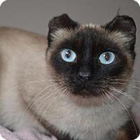 Adopt A Pet :: Addison - Williamston, MI