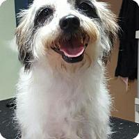 Adopt A Pet :: Jax - Victoria, TX