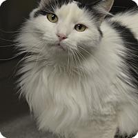 Adopt A Pet :: Ethel - Germantown, TN