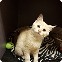Adopt A Pet :: Tia - Lexington, KY