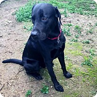 Adopt A Pet :: Elijah - Clovis, CA