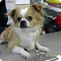 Adopt A Pet :: A607830 - Louisville, KY