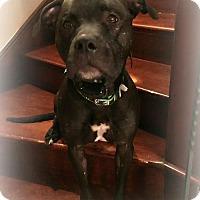 Adopt A Pet :: Ozzy - Santa Monica, CA