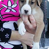 Adopt A Pet :: Tony - Denver, CO