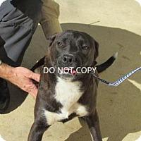 Adopt A Pet :: Becca - Rocky Mount, NC