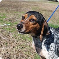 Adopt A Pet :: DeeDee~meet me!~ - Glastonbury, CT