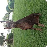 Adopt A Pet :: Otto - Loxahatchee, FL