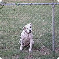 Adopt A Pet :: Speckle Belly - Blanchard, OK