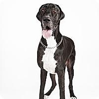 Adopt A Pet :: Molly - Mesa, AZ