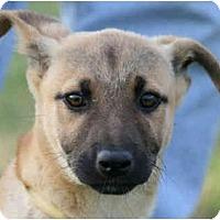 Adopt A Pet :: Marty-URGENT - kennebunkport, ME